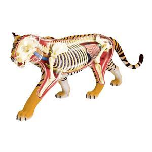 4D Master Vision Kaplan Anatomi Modeli