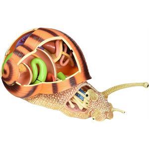 4D Master Vision Salyangoz Anatomi Modeli