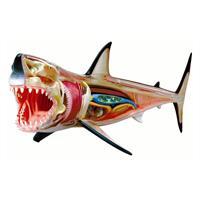 4D Master Vision Büyük Beyaz Köpek Balığı Anatomi Modeli