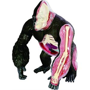 4D Master Vision Goril Anatomi Modeli