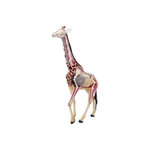 4D Master Vision Zürafa Anatomi Modeli